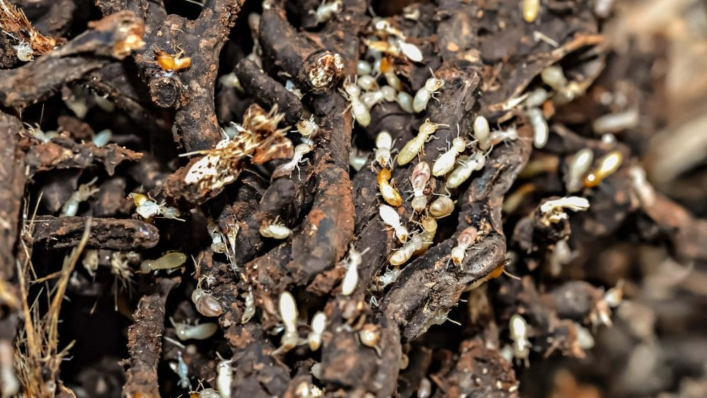 Termite-Treatments-for-your-Home ScorpionTech Pest Control