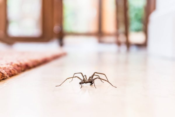 How to Control Spiders