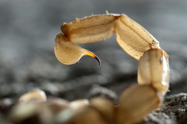 Ways-to-Keep-Scorpions-Out