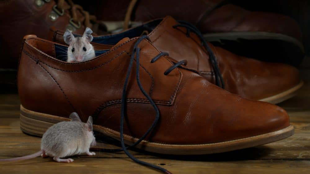 Three Top Ways to Keep Mice Out!