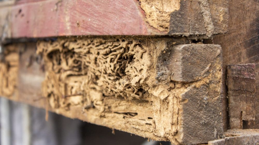 Time for a Termite Inspection!