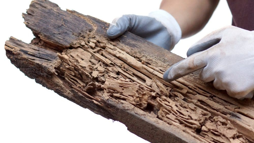 Wood Destroying Insect Inspection Report