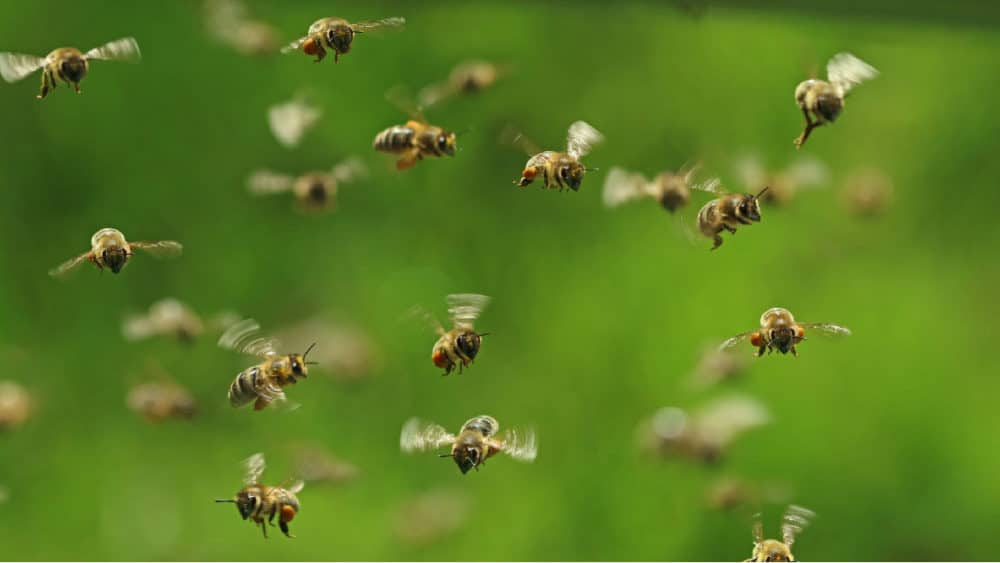 Home Bee-Proofing